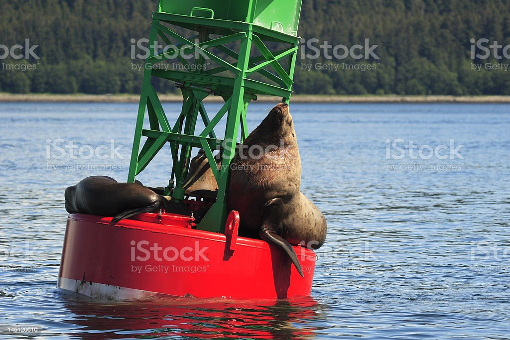 Male and female sea lion sleeping relaxing on buoy stock photo