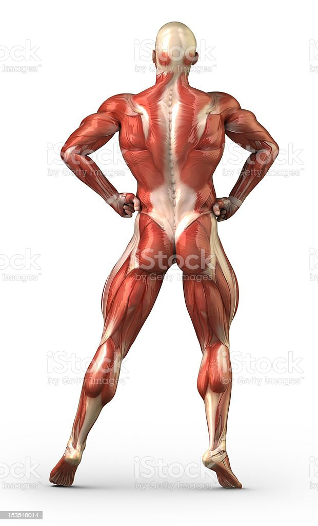 Male  back muscular system in body-builder pose stock photo