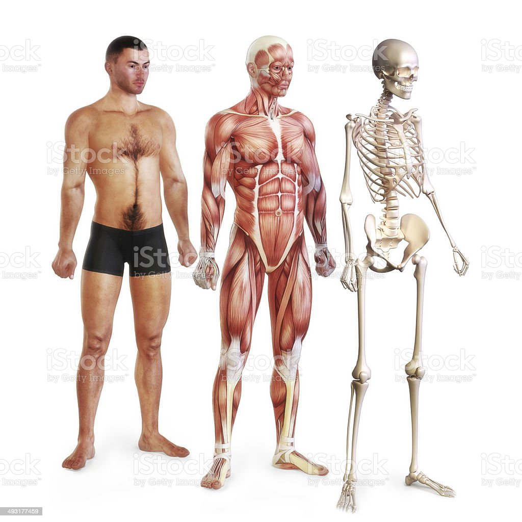 Male body systems illustration stock photo