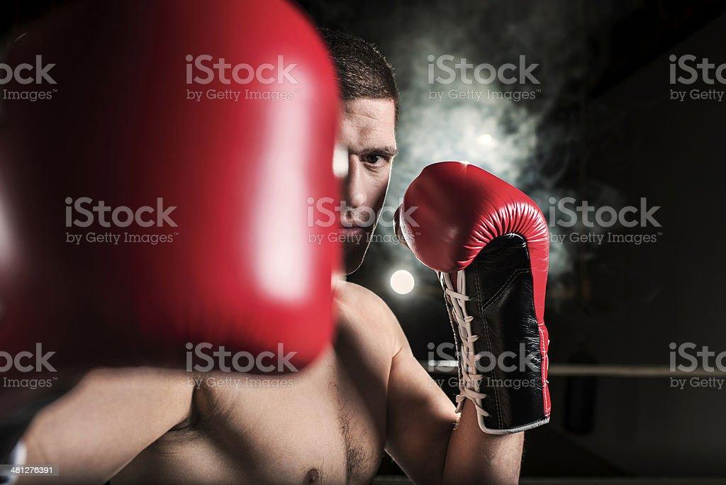 Male boxer. stock photo