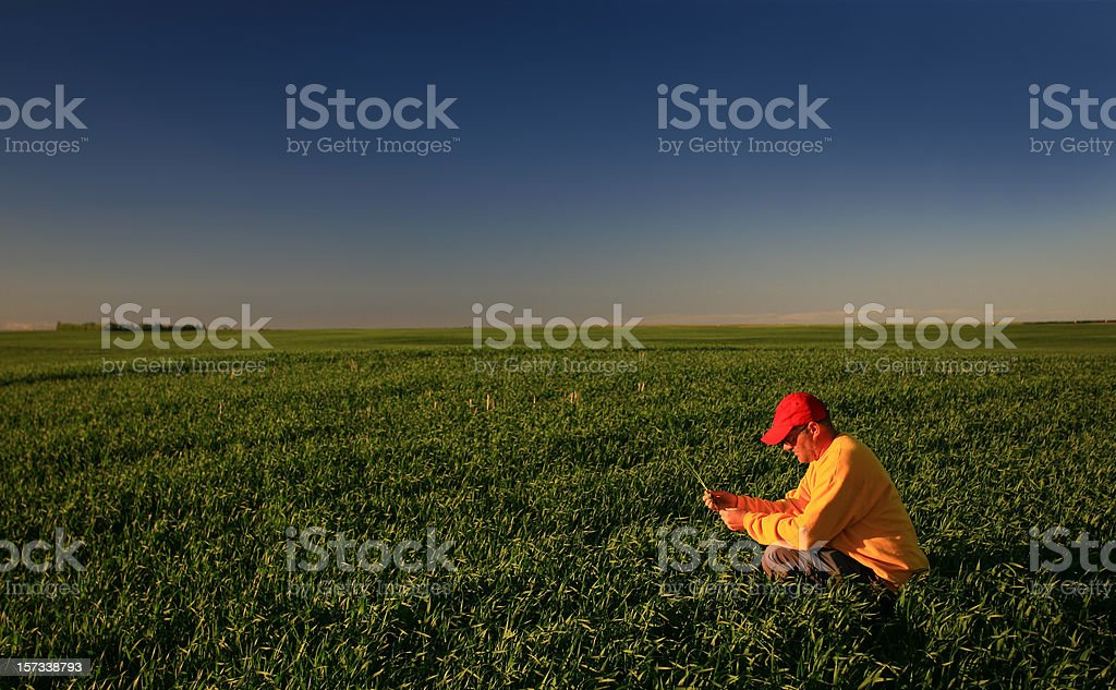 Male Caucasian Farmer Inspecting his Wheat Field in Spring stock photo