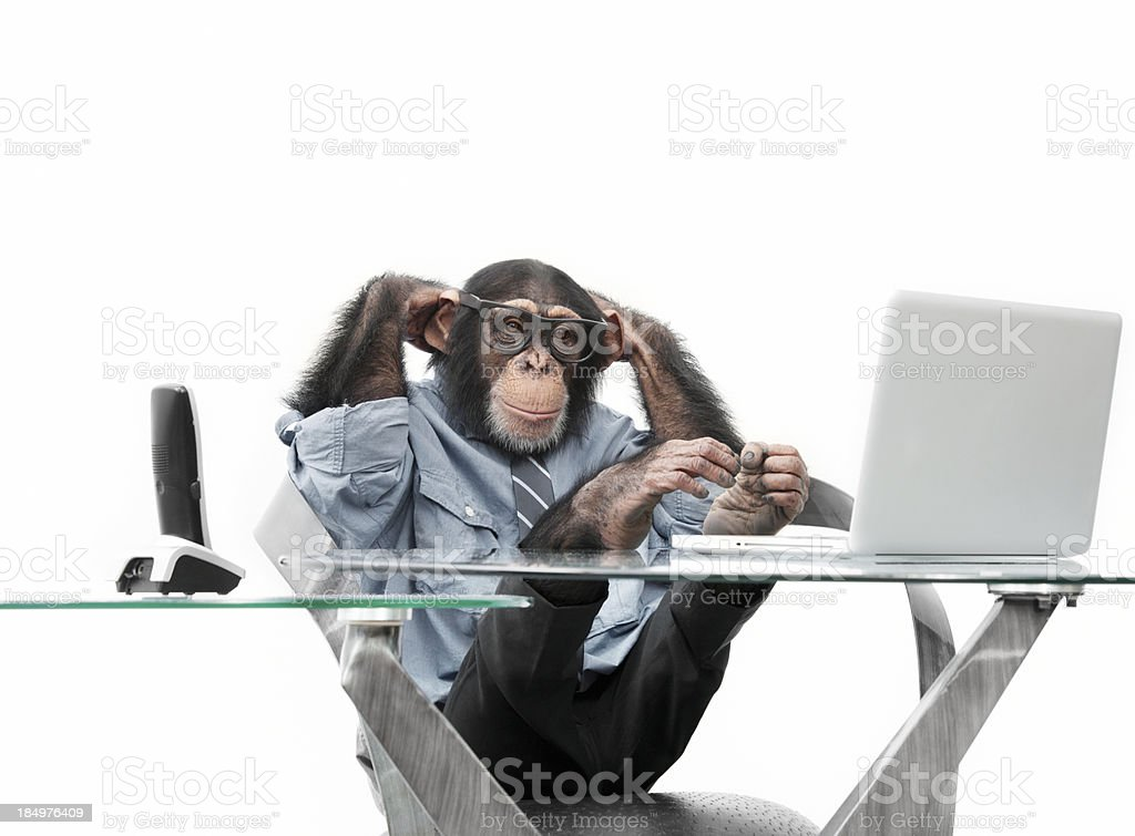 Male chimpanzee in business clothes royalty-free stock photo