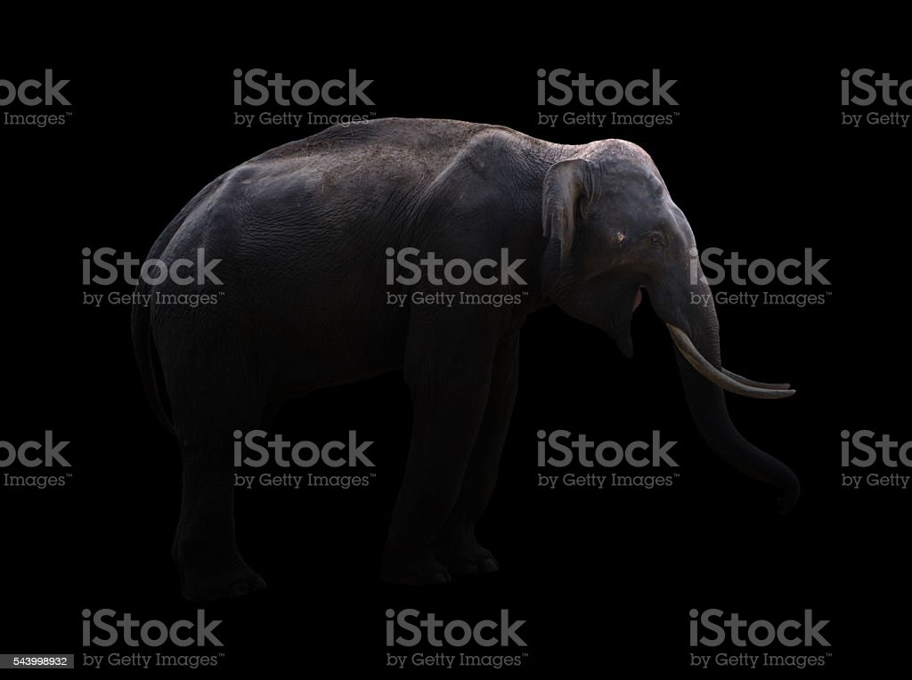male elephant standing at night time stock photo