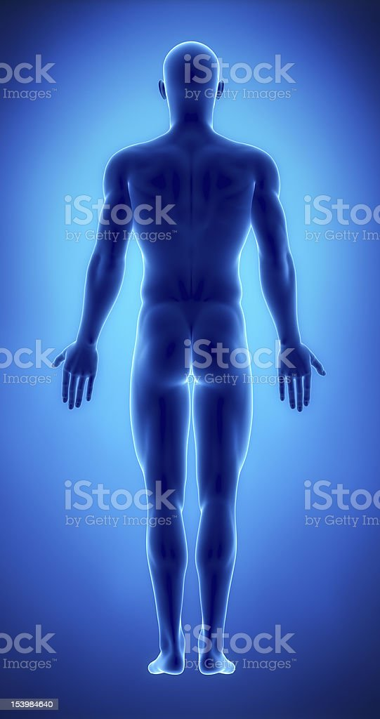 Male figure in anatomical position posterior  view royalty-free stock photo