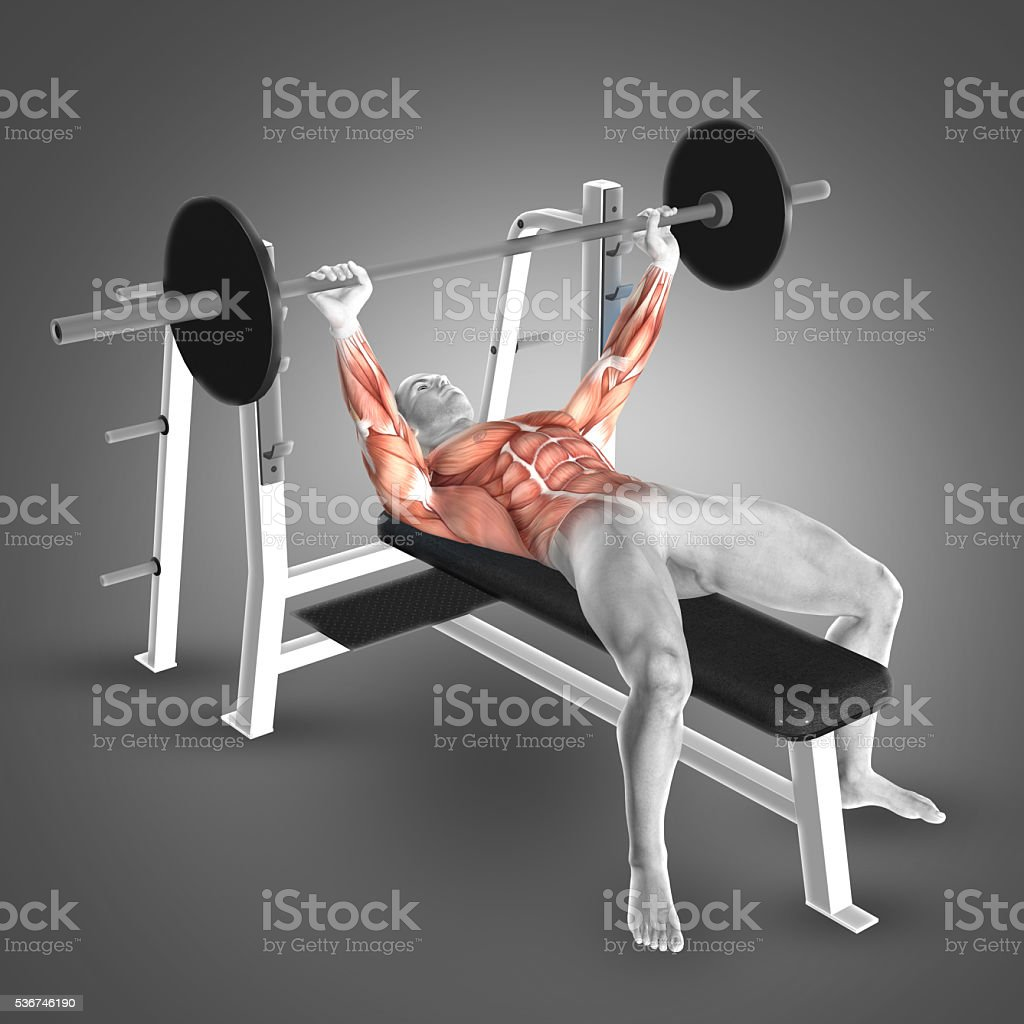 3D male figure in barbell bench press pose stock photo