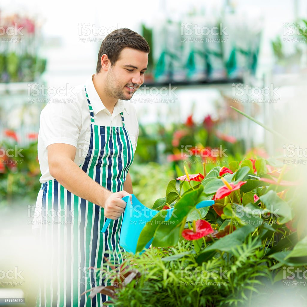Male Florist Watering Flowers. royalty-free stock photo