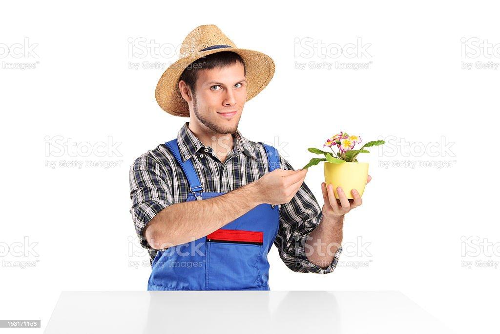 Male gardener checking a flower pot royalty-free stock photo