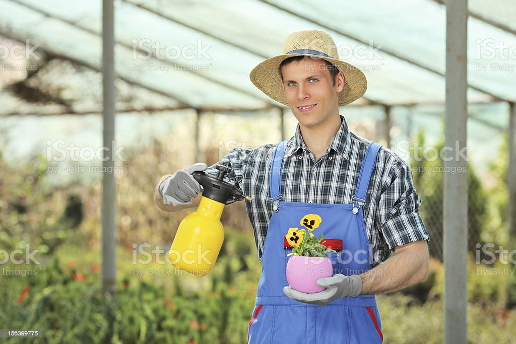 Male gardener watering a plant in garden royalty-free stock photo