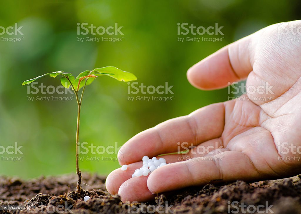 Male hand giving plant fertilizer to young tree stock photo