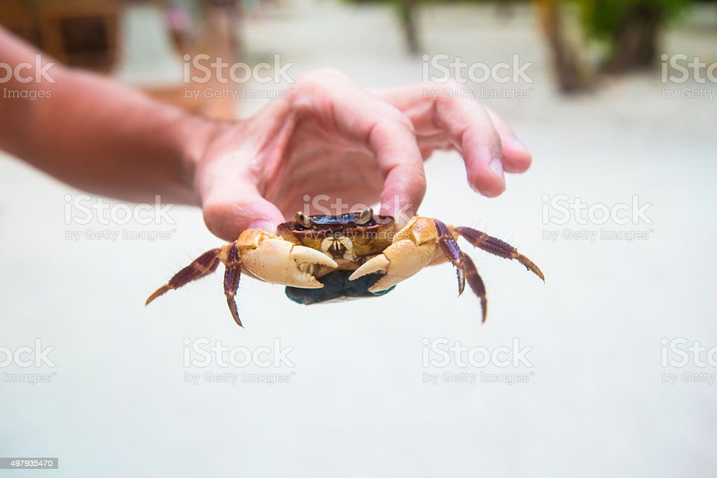 Male hand holding large live crab at white beach stock photo