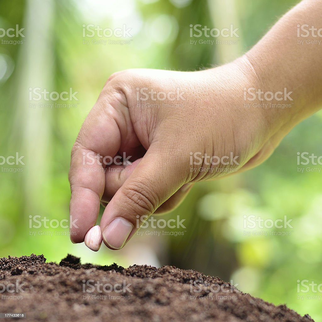 Male hand is seeding peanut stock photo