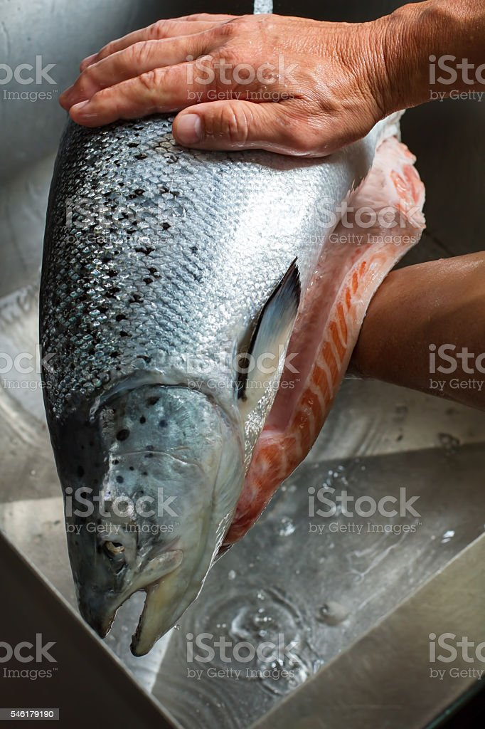 Male hands holding a fish. stock photo