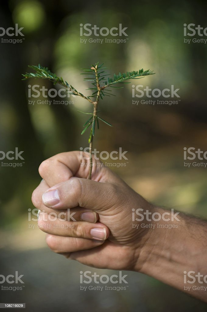 Male Hand's Holding Young Tree Sapling Outside royalty-free stock photo