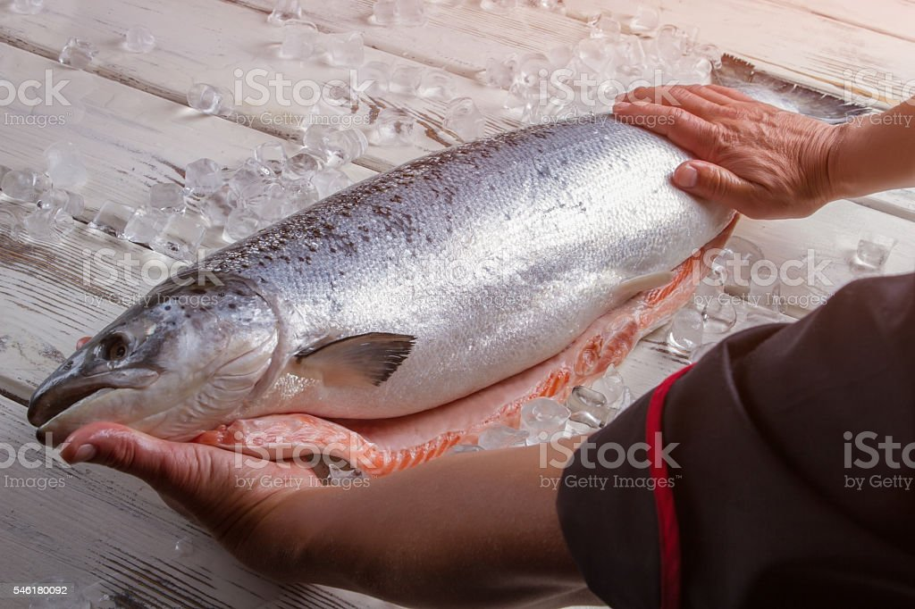 Male hands touch raw fish. stock photo