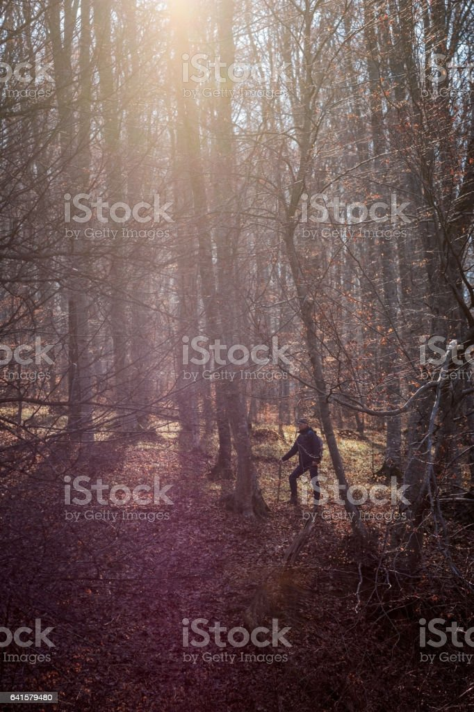 Male hiking through the forest illuminated by the spring sun stock photo