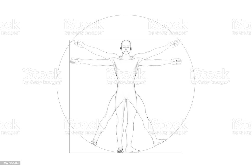 Male Human Body Proportions, White Background stock photo