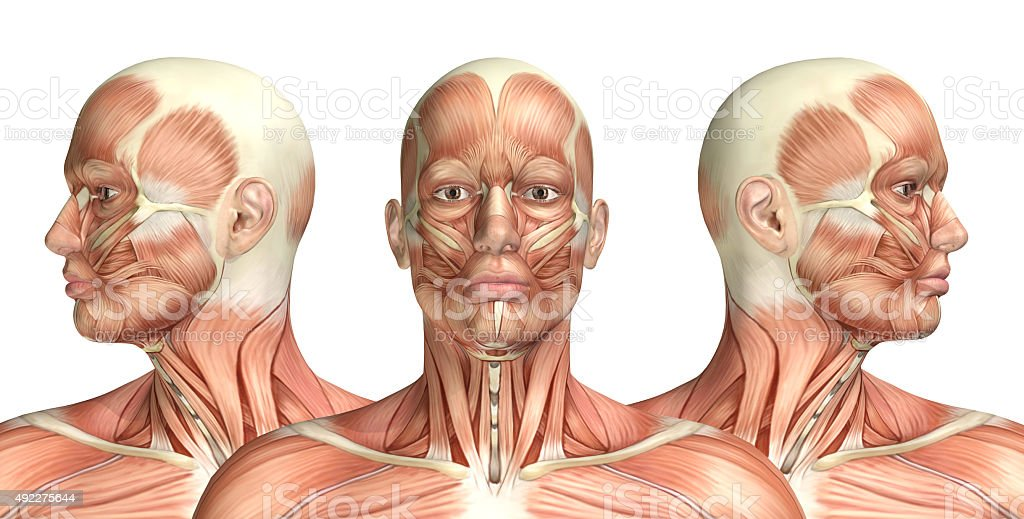 3D male medical figure showing cervical rotation stock photo
