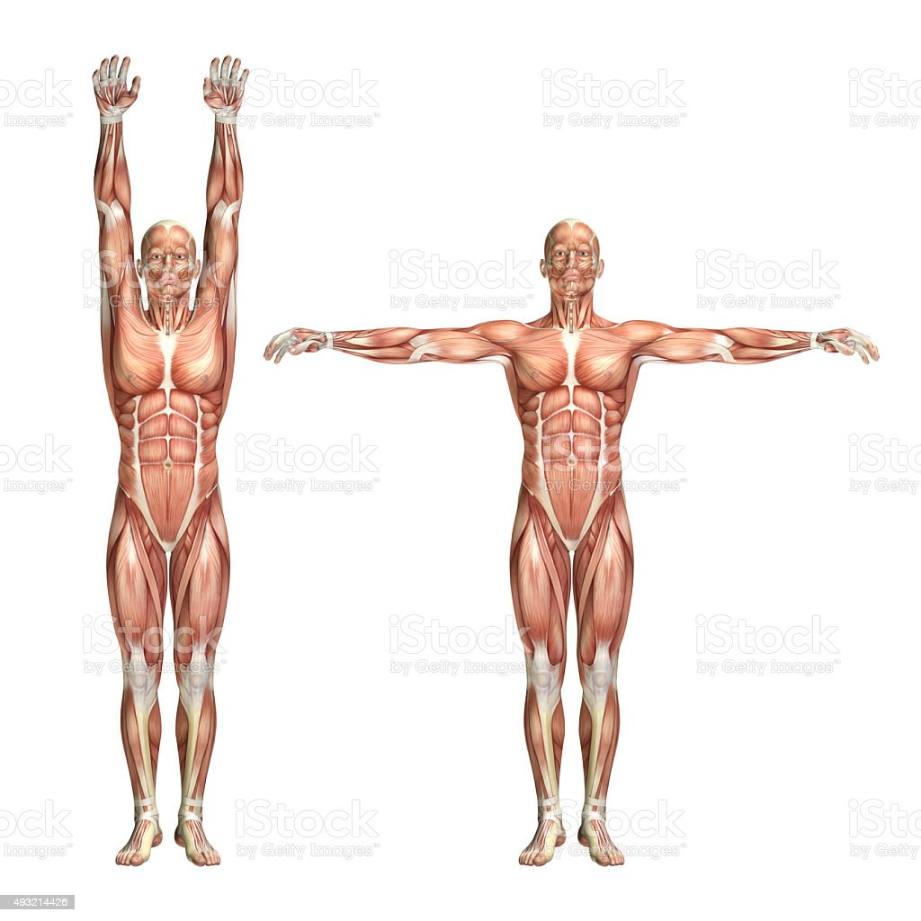 3D male medical figure showing shoulder abduction and adduction stock photo
