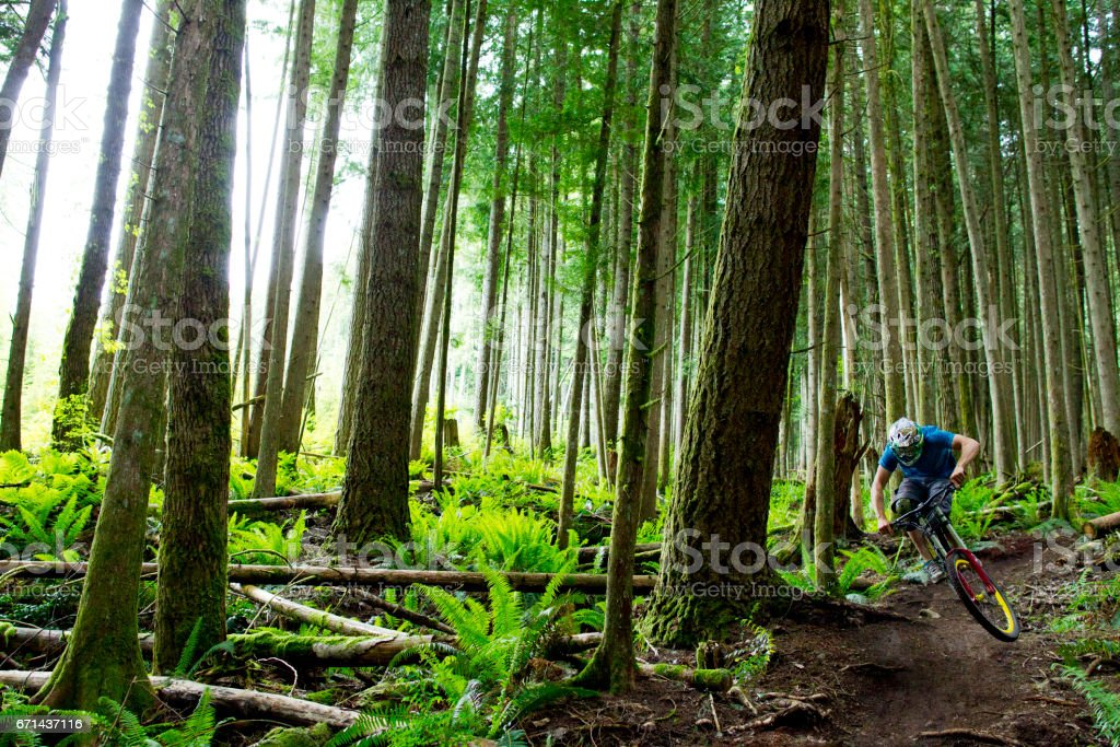 A male mountain biker rides a small jump on a downhill trail in a deep forest in British Columbia, Canada. stock photo