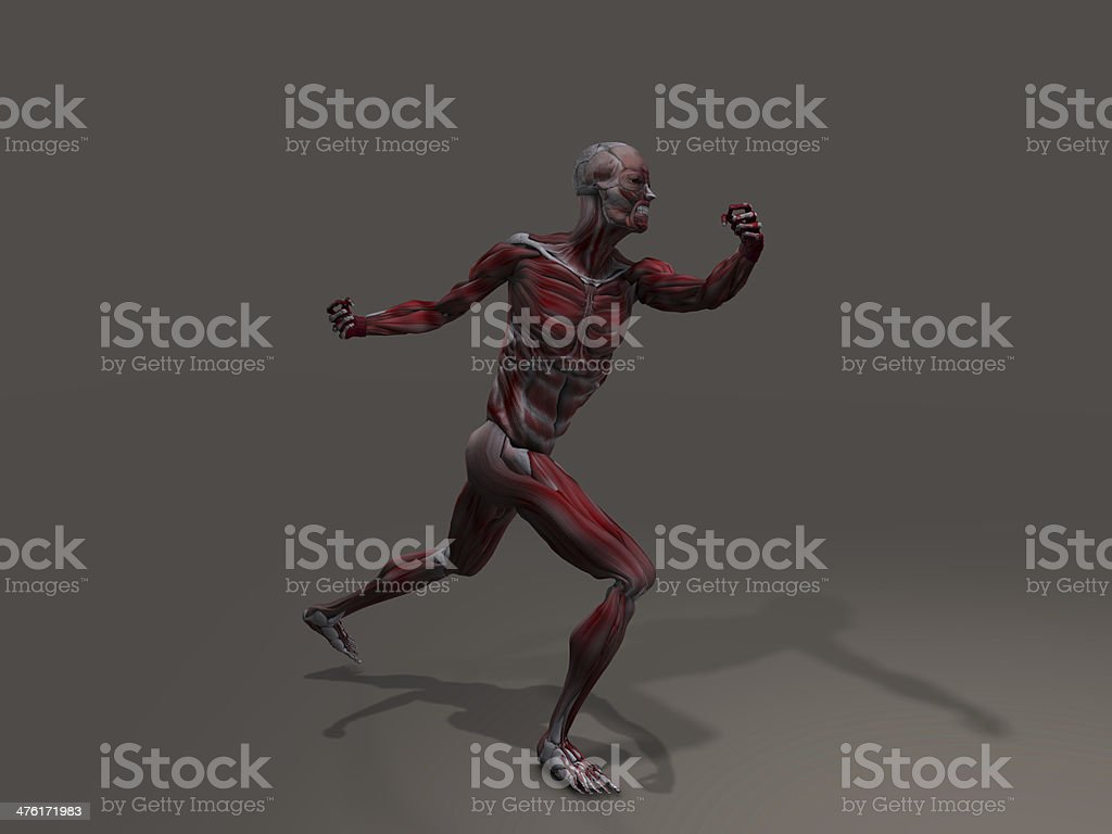 Male Musculature royalty-free stock photo