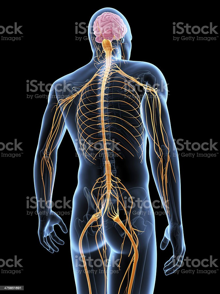 male nerves royalty-free stock photo