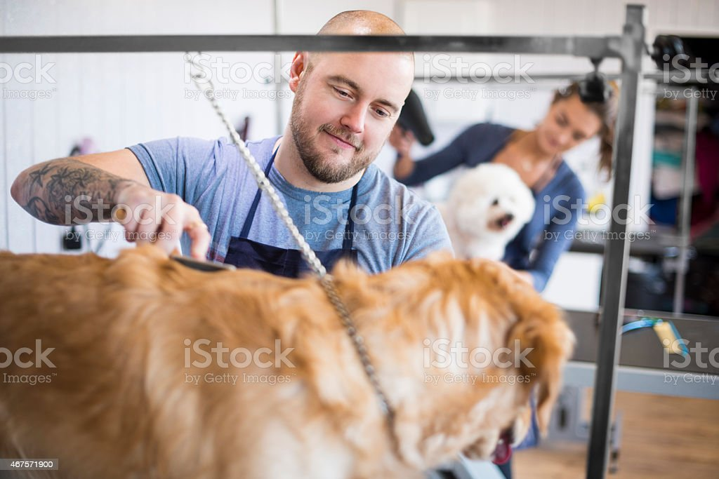 male pet grooming staff grooming dogs. stock photo
