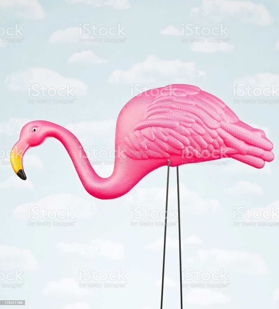 Male Pink Flamingo Against Sky stock photo
