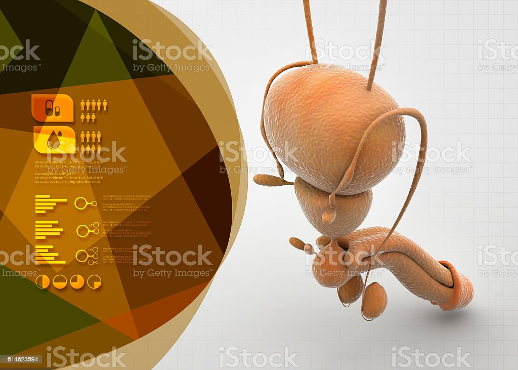 Male re productive system stock photo