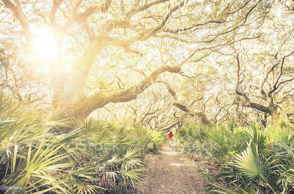Male runner on training run through woods at sunset royalty-free stock photo