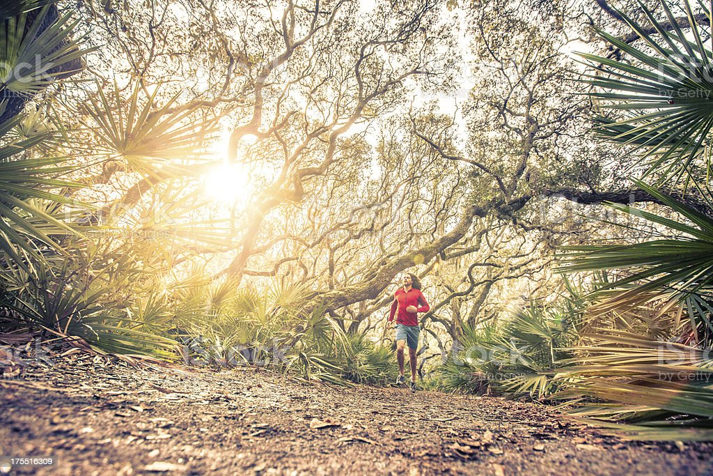 Male runner training on wooded trail at sunset royalty-free stock photo