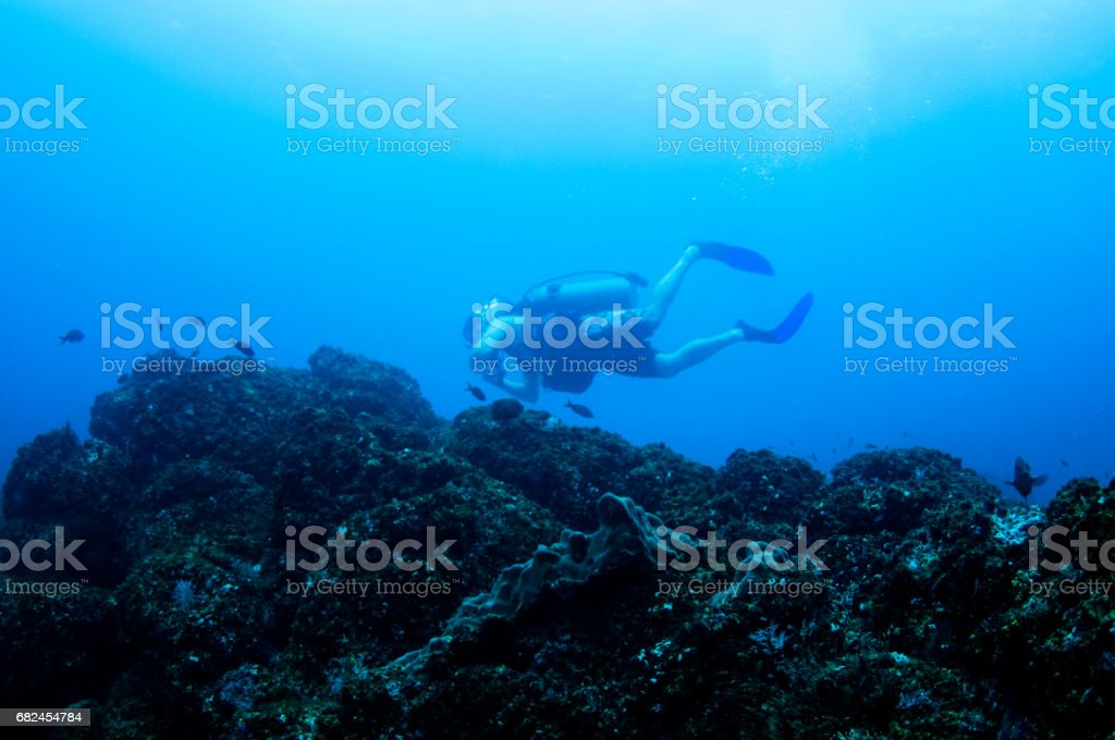 male scuba diver in background of rocky ledge with blue background stock photo