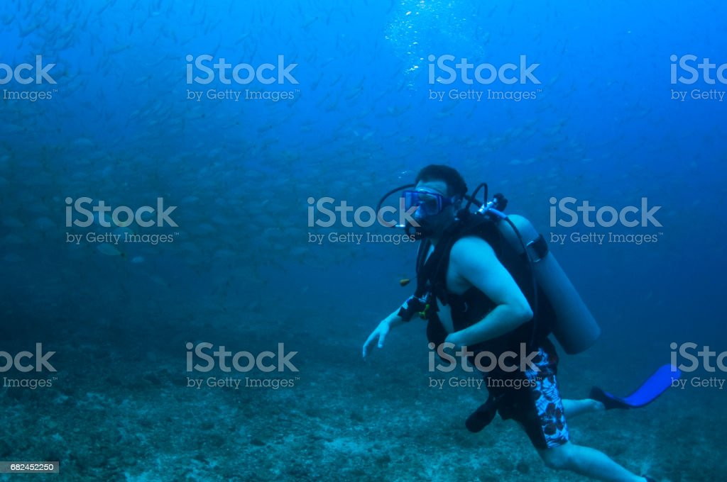 male scuba diver near rocky bottom in front of a large bait ball school of fish stock photo