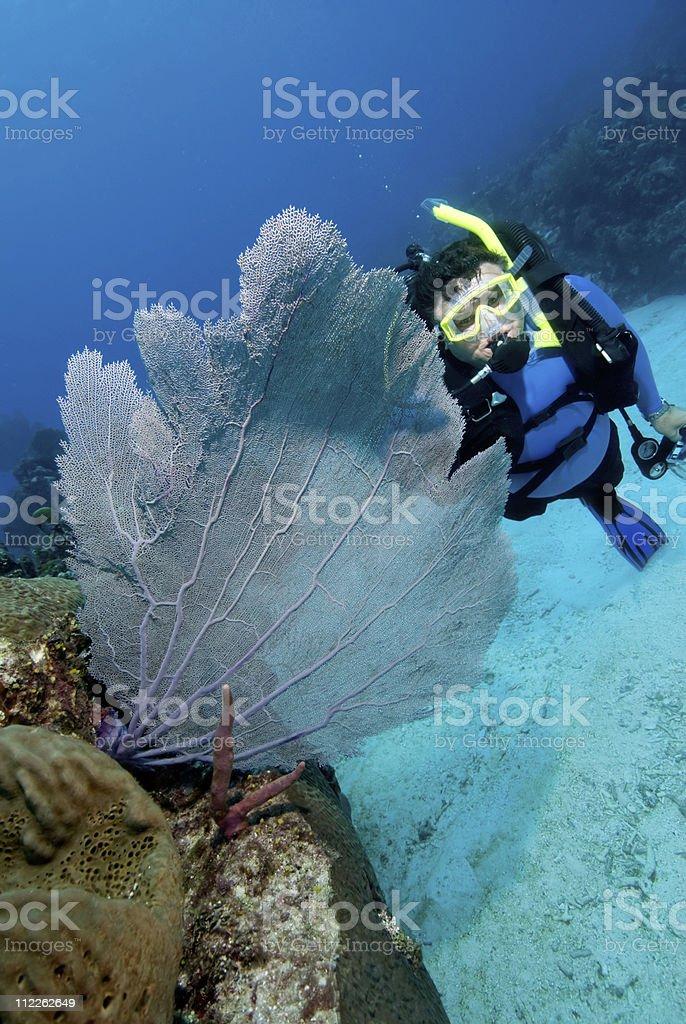Male Scuba Diver sea fan stock photo