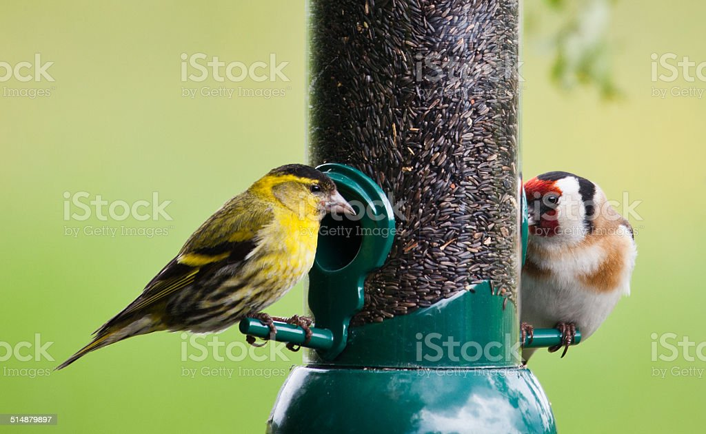 Male Siskin and Goldfinch on seed feeder stock photo