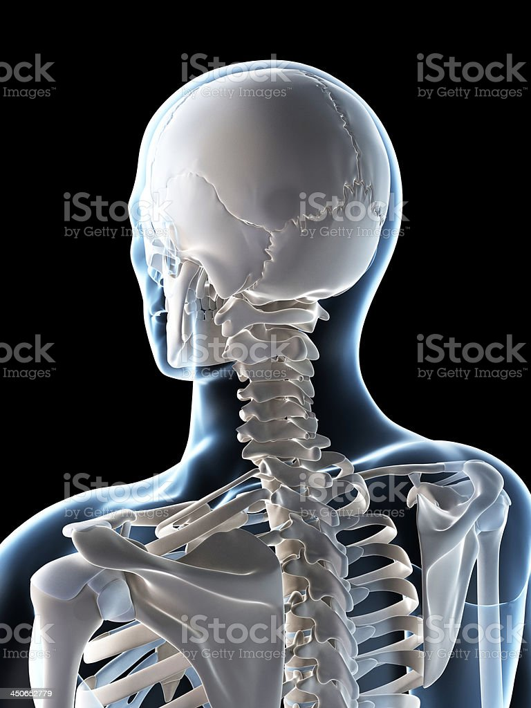 male skull stock photo