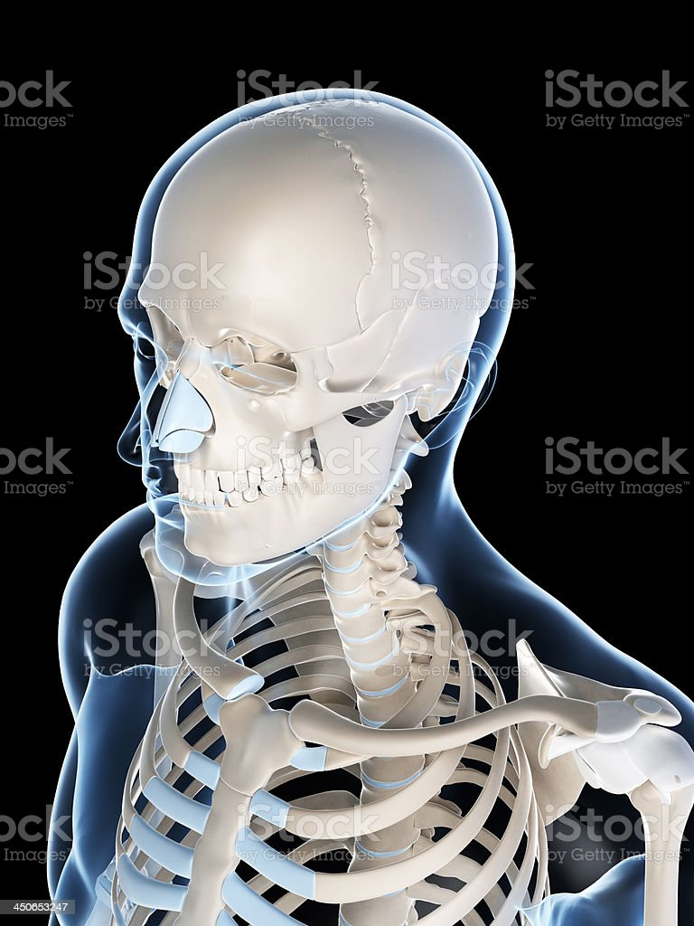 male skull royalty-free stock photo