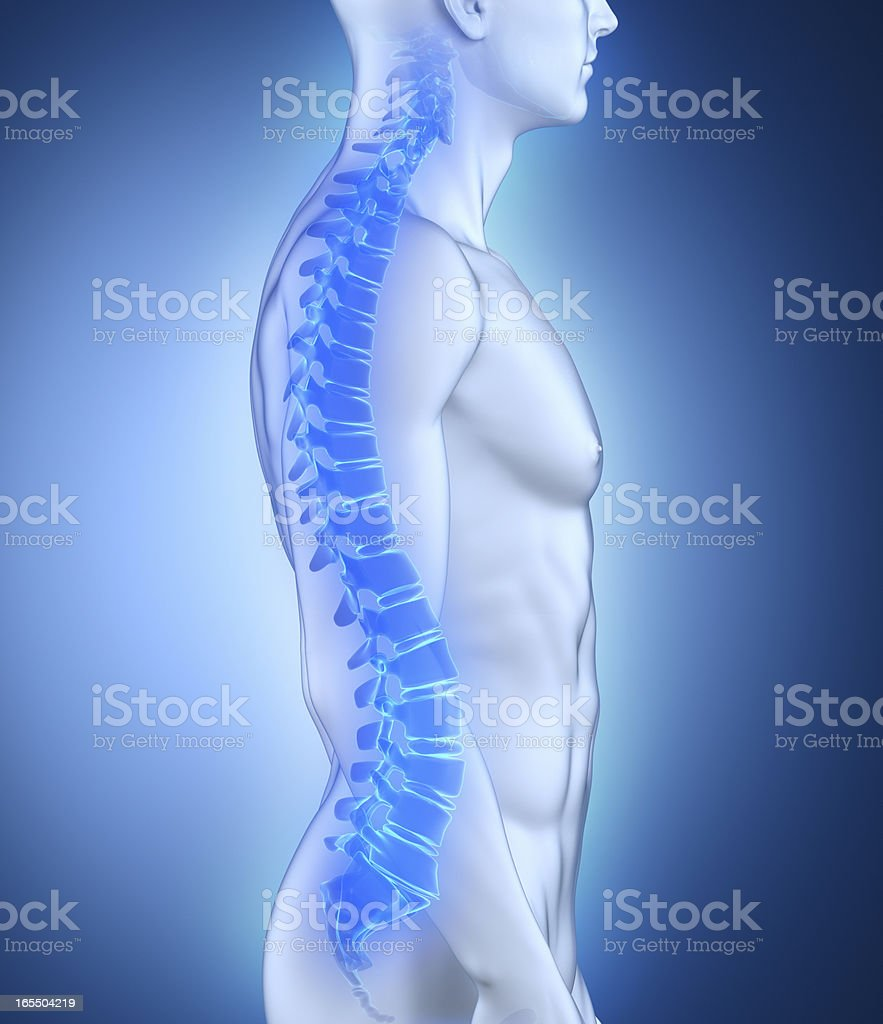 Male spine anatomy lateral view royalty-free stock photo