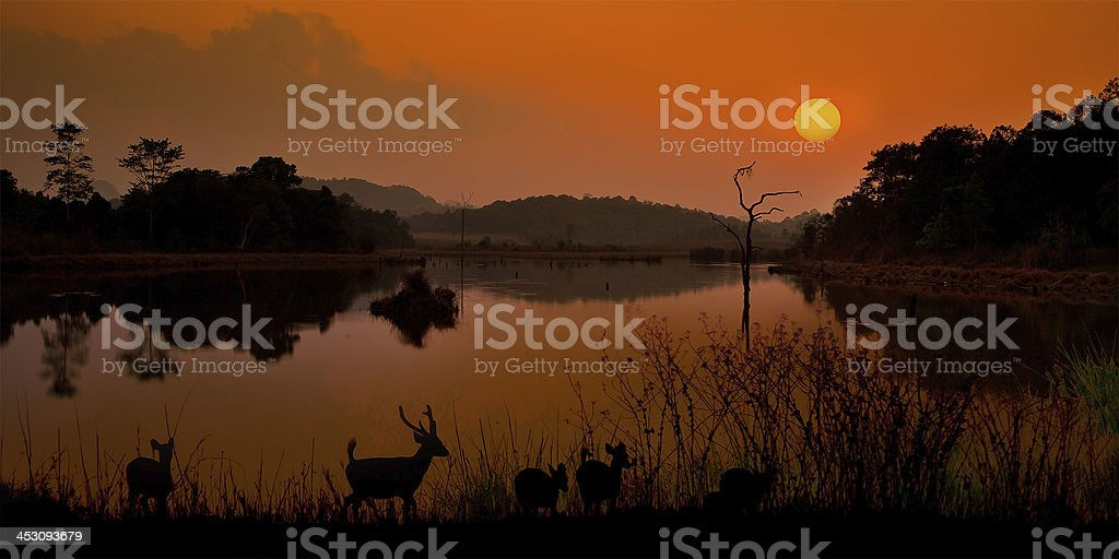 Male Stag Deer royalty-free stock photo