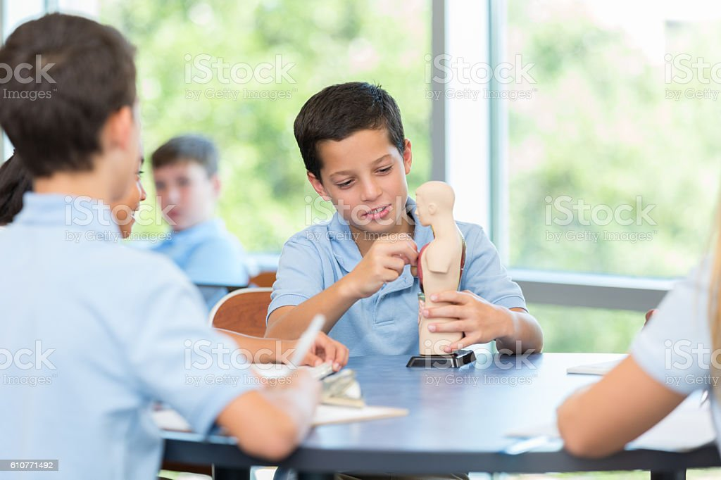 Male student describes the human anatomy to classmates stock photo
