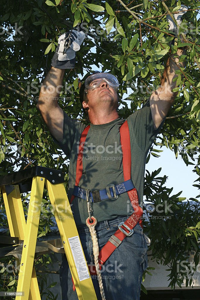 A male tree surgeon on a yellow ladder trimming tree limbs stock photo