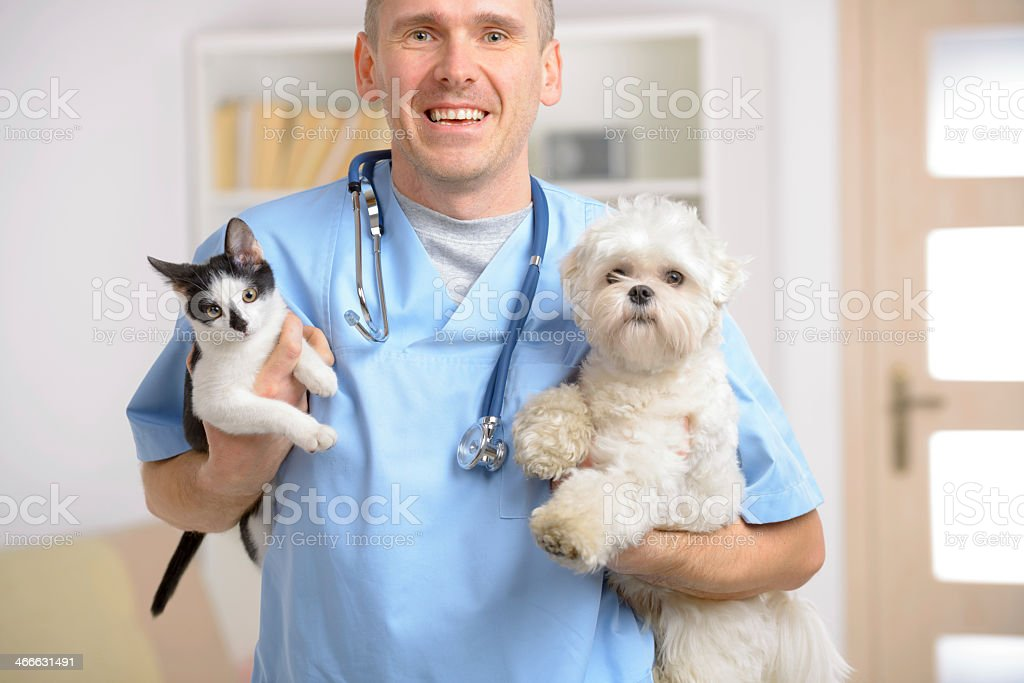 Male veterinarian in blue uniform holding cat and dog stock photo