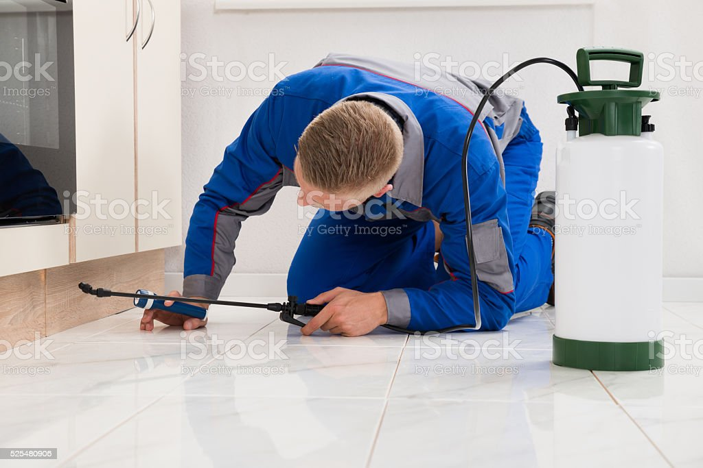 Male Worker Spraying Pesticide On Cabinet stock photo