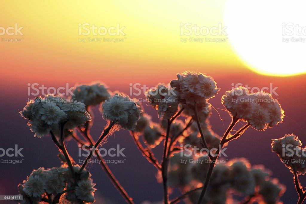 Malibu Sunset royalty-free stock photo