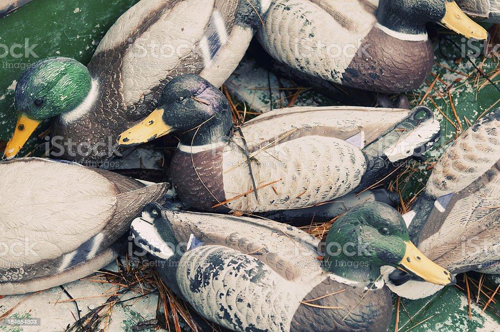 Mallard Decoys stock photo