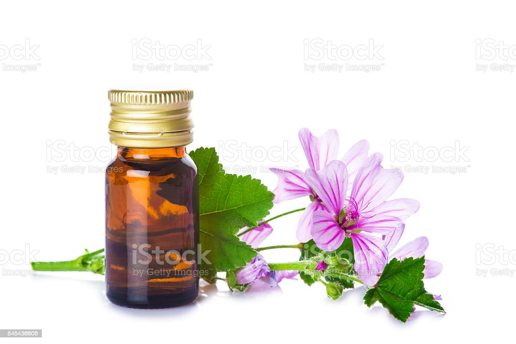 Mallow malva extract stock photo