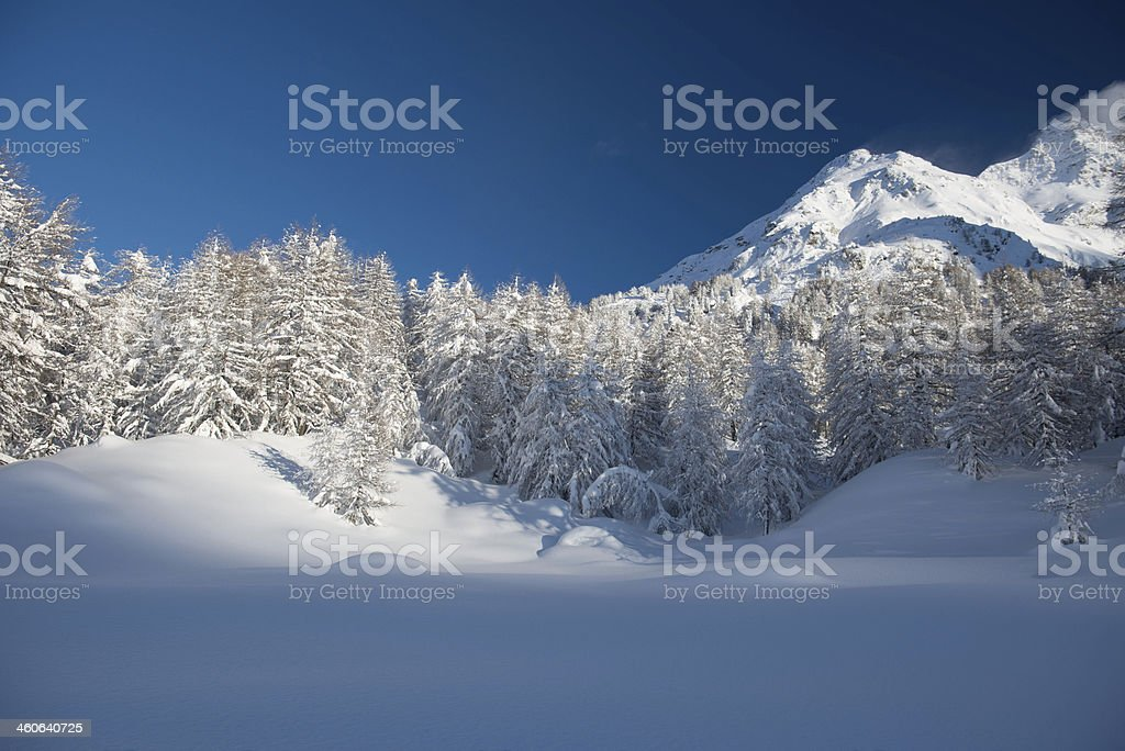 Maloja in the Engadine royalty-free stock photo