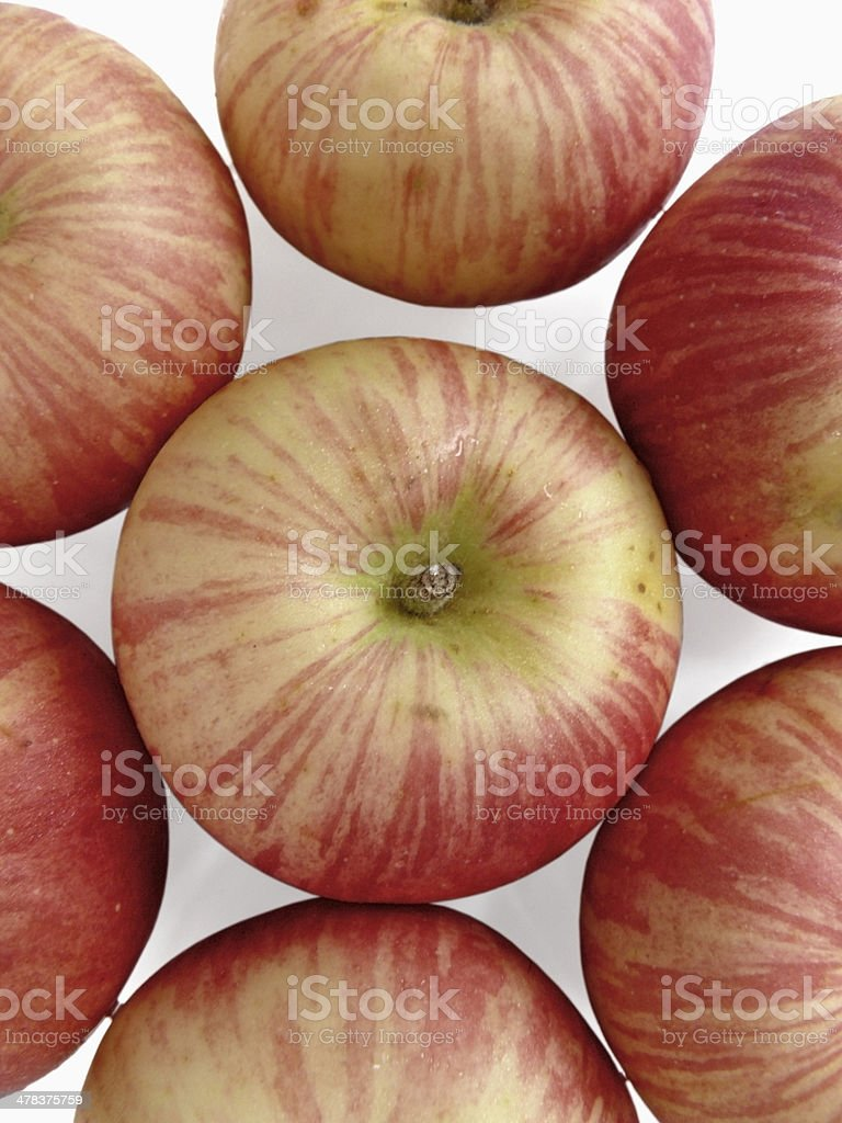Malus pumila, Apple stock photo