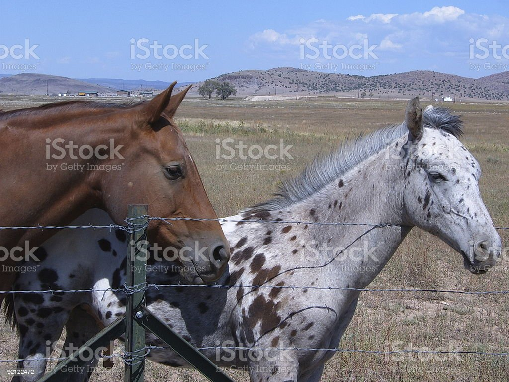 Mama and Pony Fold stock photo