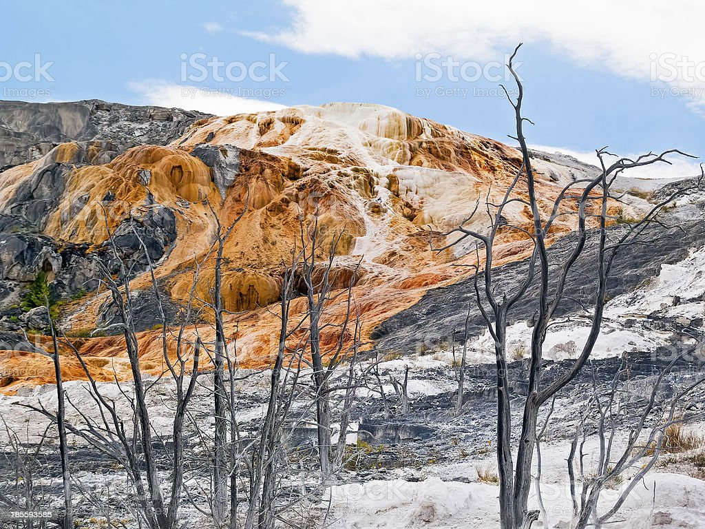 Mammoth Hot Springs alberi foto stock royalty-free
