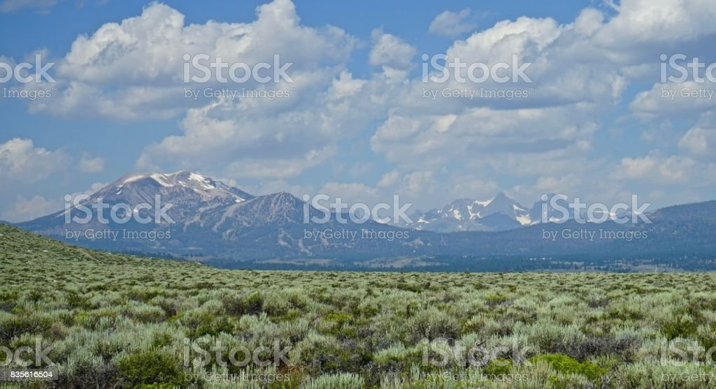 Mammoth Mountain Sage stock photo